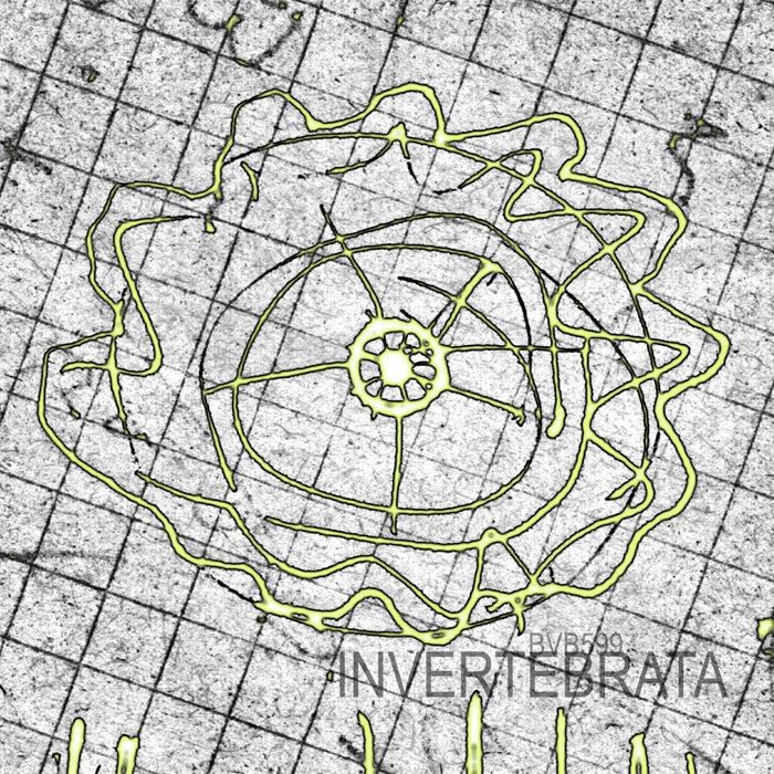 invertebrata 1 artwork - dadaism & avant garde guitar improv - 1999